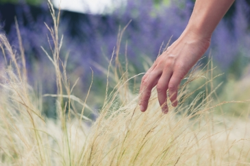 A young female hand is touching some grass outside in summer